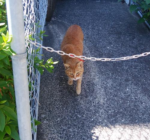 13日のネコ発見