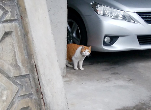 9日のネコ発見