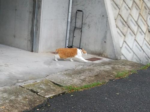 26日ネコ発見2