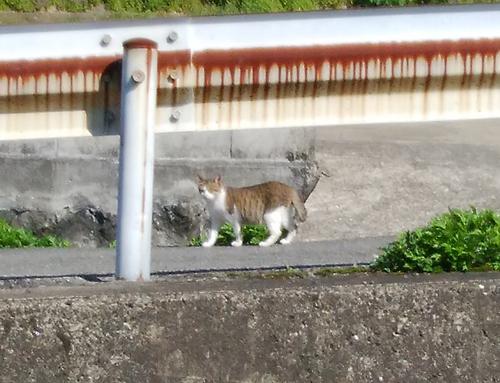 22日ネコ発見