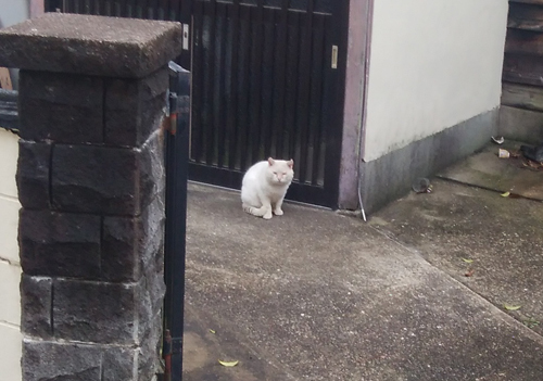 21日ネコ発見