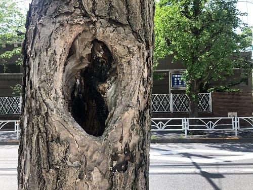 学校付近の穴