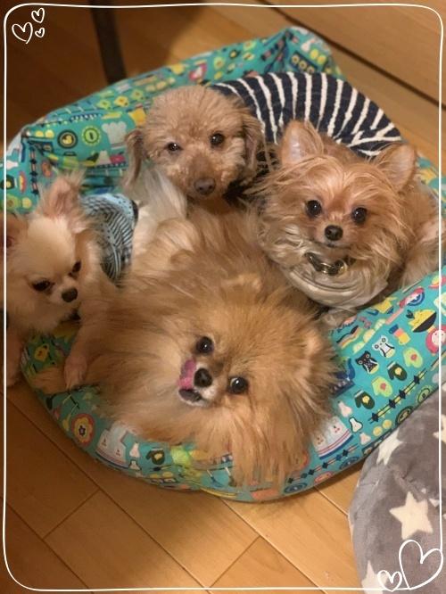 mini2019-1IMG_0875 (編集済み)(1)