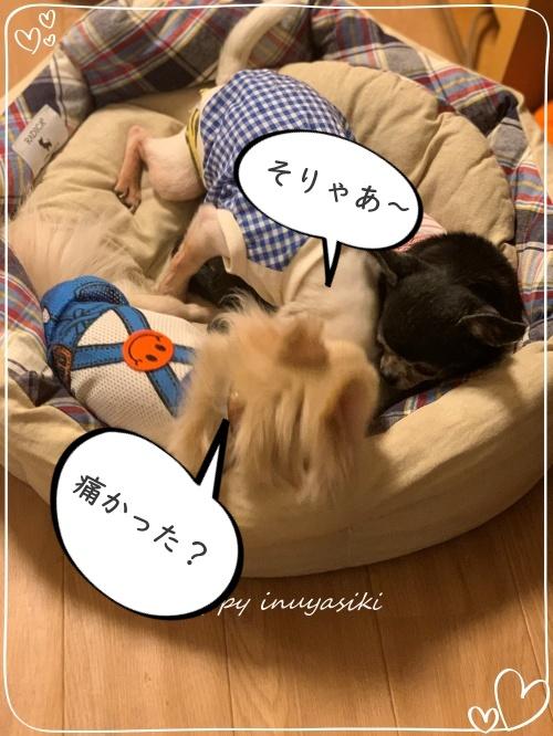 mini2019-1IMG_3908 (編集済み)2