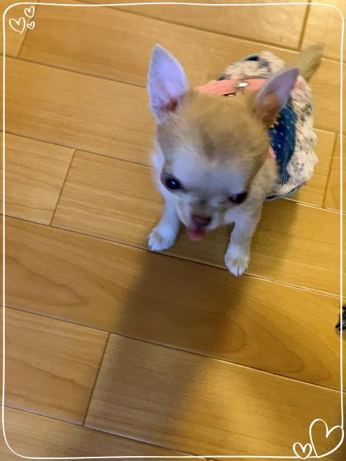 mini2020IMG_0197 (編集済み)
