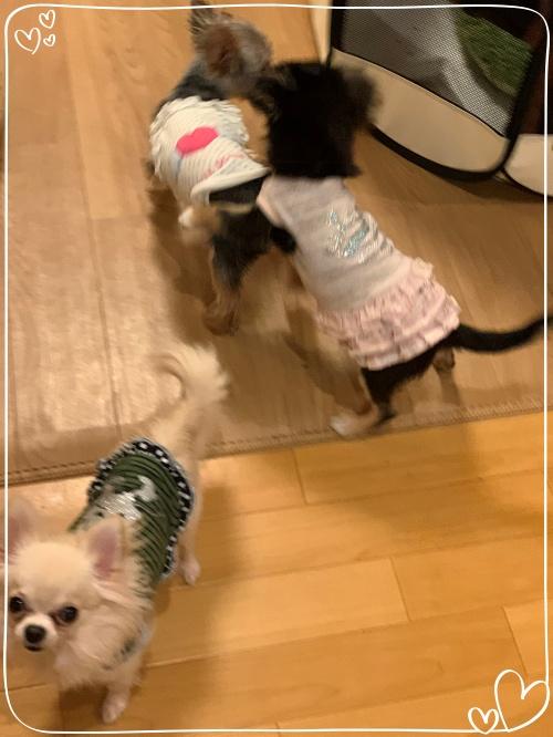 mini2021IMG_1015 (編集済み)(1)