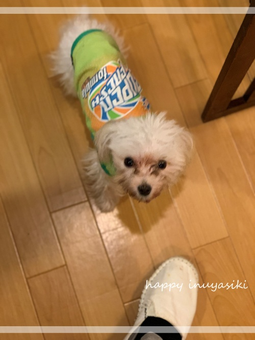 mini2021IMG_3054 (編集済み)