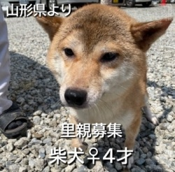 touhokusiba250.jpg