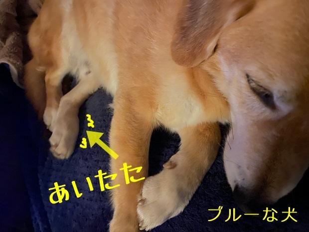 ブルーな犬