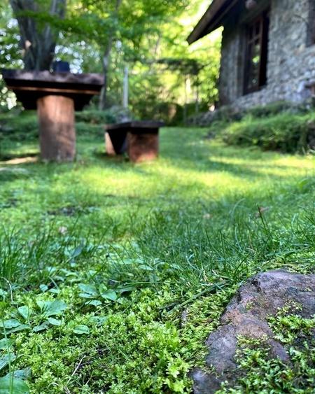 石積みの家・前庭の苔