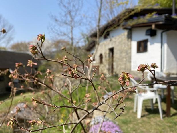 石積みの家のブルーベリーの花