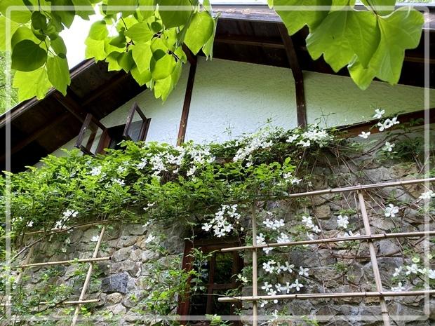 石積みの家のクレマチス