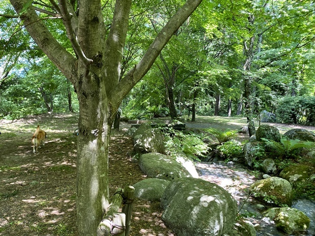 駒ヶ根高原、涼しい木陰