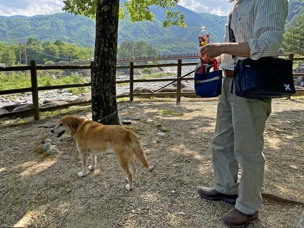 駒ヶ根高原、犬連れ2