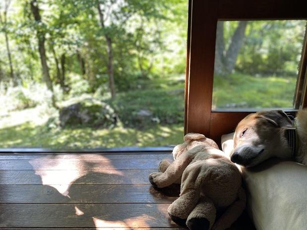 秋の木漏れ日の中、熟睡犬