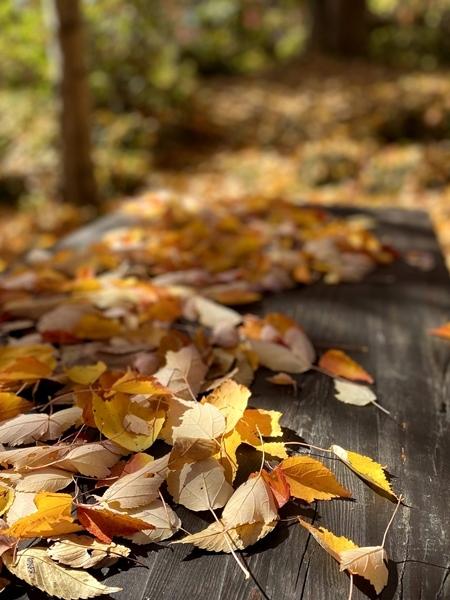テーブルの落ち葉