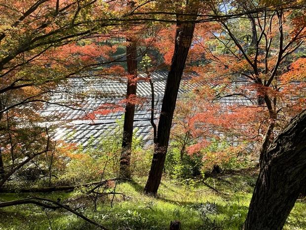 紅葉の大王わさび農場