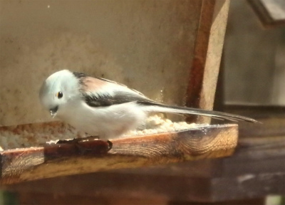 the bird watching cafe11-crop