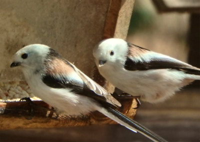 the bird watching cafe9-crop
