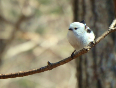 the bird watching cafe22-crop