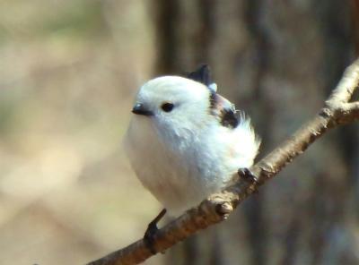 the bird watching cafe22-crop-crop