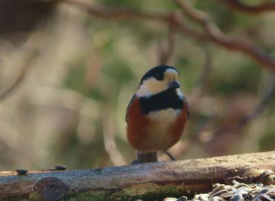 bird cafe4-crop