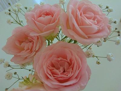 4月の薔薇わんこいん