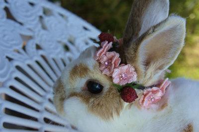花かんむりルナ3