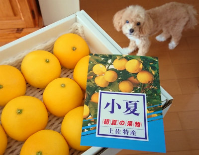 2020小夏-crop