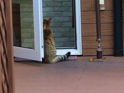 中華屋さんの猫