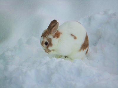 雪の中のルナお顔ごしごし