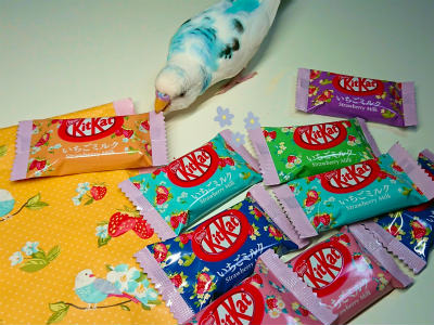 kitkat3.jpg