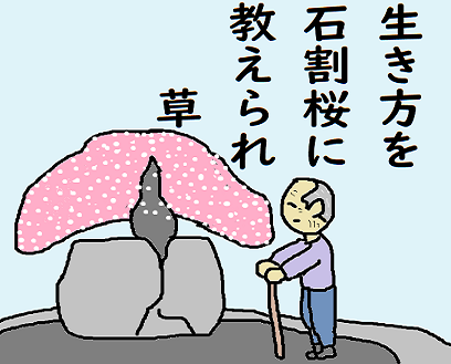 川柳 2年4月 桜 草 ペ