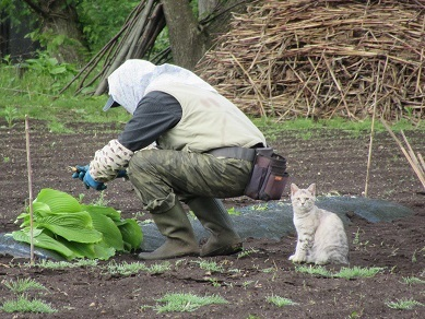 憲さんと猫