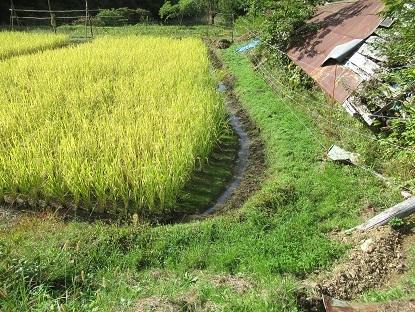 稲刈り 準備1