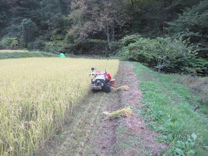 IMG稲刈りを開始