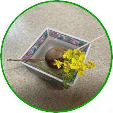 アボカドの種&株の花