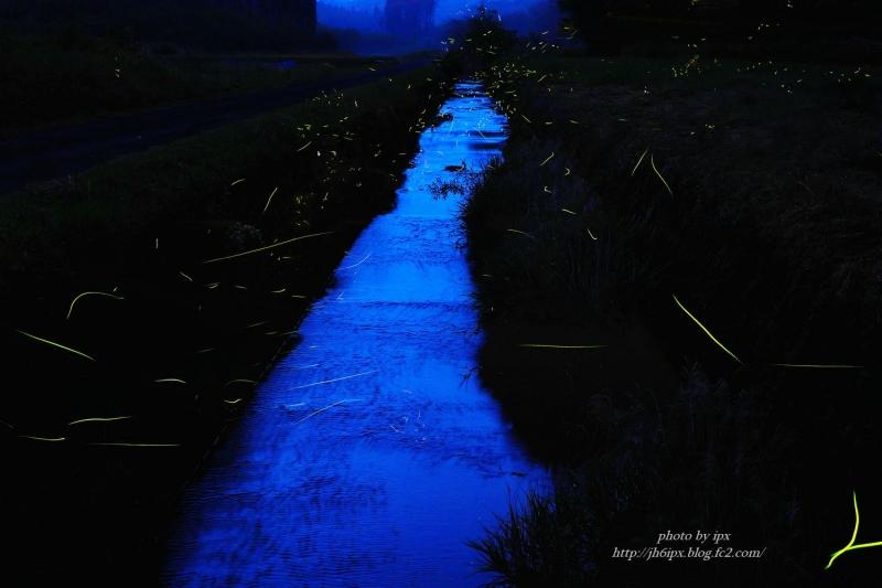 ホタルの川 (2)(blog)