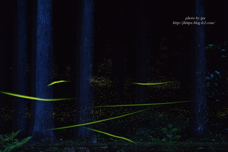 森の光(blog)