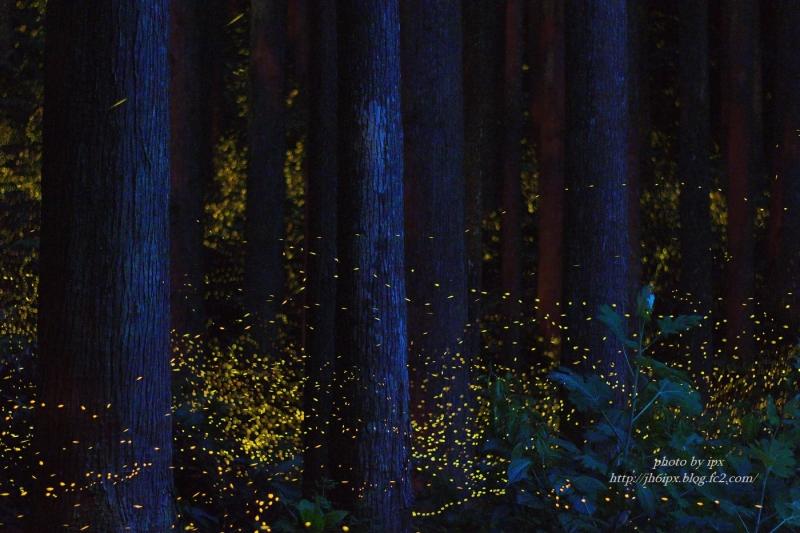 森のヒメ舞台(blog)