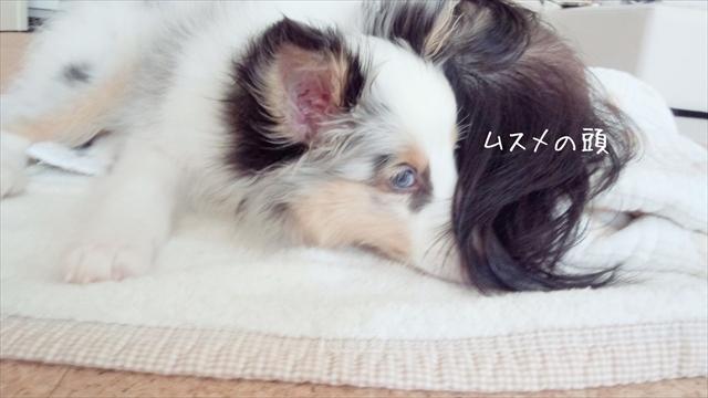 子犬とムスメ