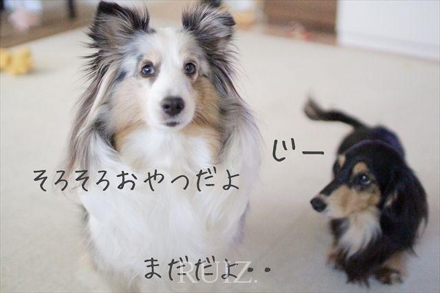 ジーンモノビタ!!成犬だって成長するのだ。