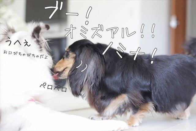 オミズアルヨ!ノミナ!!