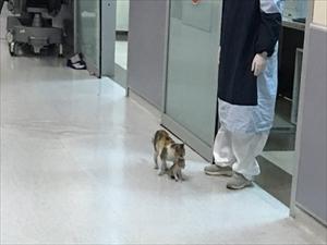 【画像】猫、子猫をくわえて医者に連れてくるwww