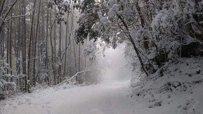 20210115雪の竹林