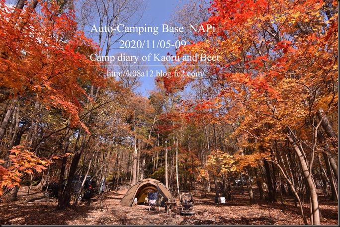 NAPi202011-002