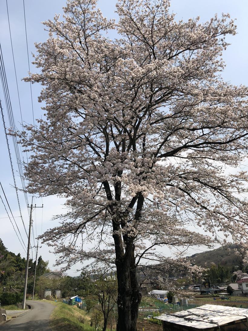 秋川サイクリングロード57