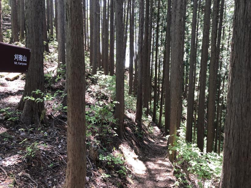 今熊神社~盆掘間伐作業道32