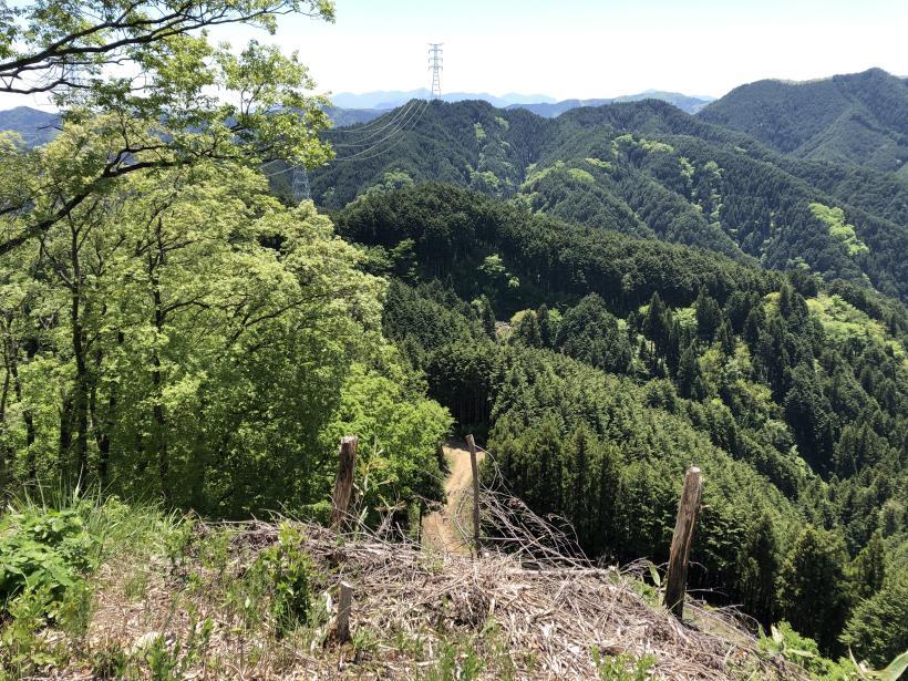 今熊神社~盆掘間伐作業道41