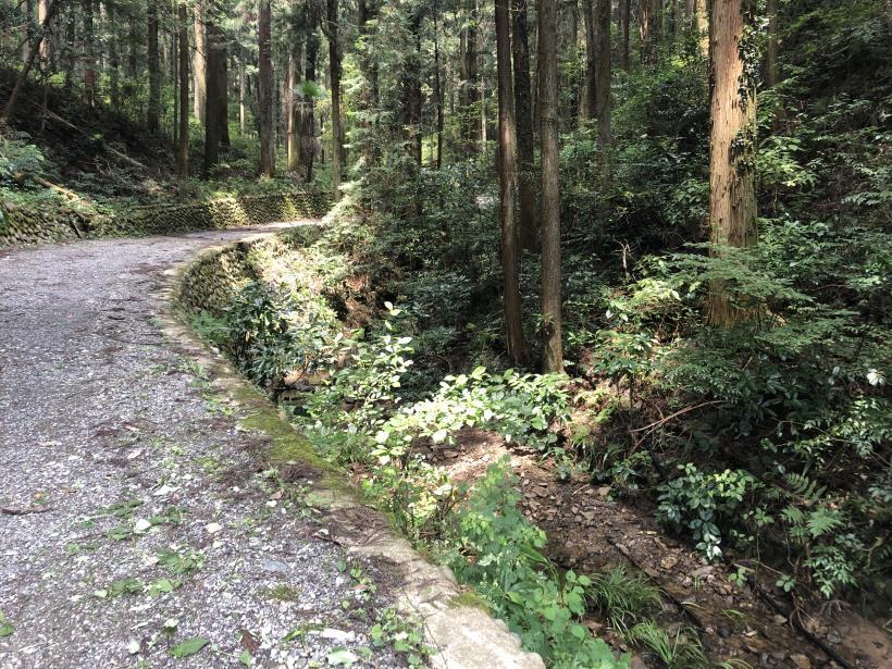樽沢林道と金比羅山08